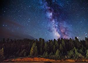 Фото Млечный Путь Леса Небо Звезды Ночь Природа