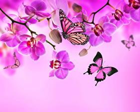 Фотография Орхидеи Бабочки Насекомые Фиолетовый Цветы Животные