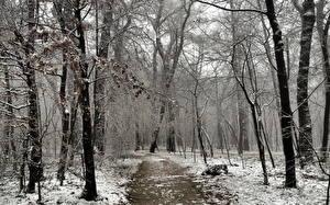 Картинка Парки Зимние Деревья Тропы Природа