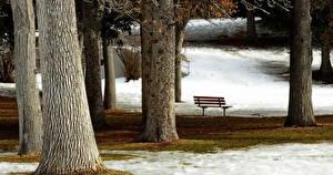 Картинка Парки Скамейка Дерева Ствол дерева Города