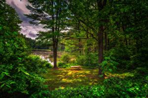 Картинка Лето Лес Дерево Кустов Скамейка Природа