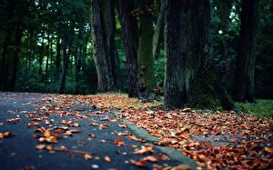 Фото Дороги Осень Листья Деревья Природа