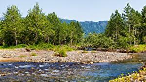 Фотография Россия Пейзаж Леса Горы Камчатка Ручей Природа
