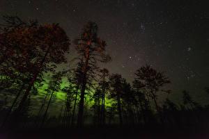 Фотография Небо Звезды Ночные Деревья Полярное сияние Природа