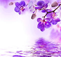 Картинки Орхидея Фиолетовых Цветы