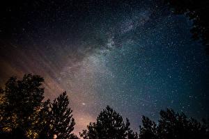 Картинки Млечный Путь Звезды Небо Ночь Деревья Космос