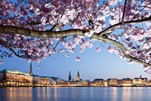Фотография Германия Здания Реки Весна Цветущие деревья Гамбург Ветки