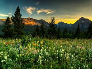 Картинка Пейзаж Штаты Парки Гора Поля Ель Трава Glacier National Park Природа