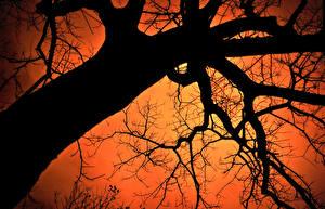 Обои Деревья Ветки Ствол дерева Силуэт Вид снизу Природа фото