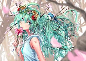 Фотографии Vocaloid Hatsune Miku Волосы Аниме Девушки