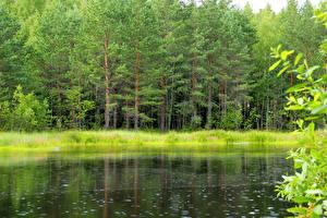 Картинки Россия Лес Реки Лето Ленинградская область Природа