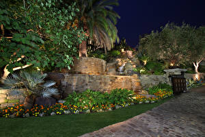 Картинки Сады Пальмы Газон Ночь Природа