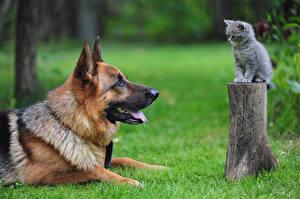 Фотография Собаки Трава Пень 2 Котята Овчарка Животные