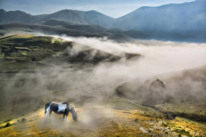 Картинки Италия Лошадь Поля Гора Пейзаж Тумана Monti Prenestini Природа Животные