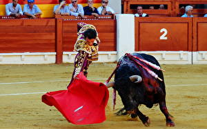 Обои Испания Быки Мужчины Matador