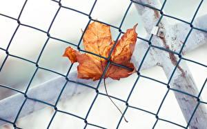 Обои Крупным планом Осенние Листья Забор