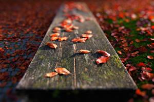 Картинка Вблизи Осень Скамья Листва