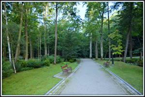 Картинки Парки Скамья Дерева Природа