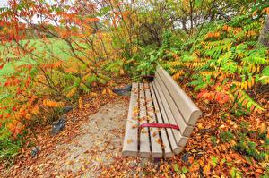 Картинки Парки Осенние Скамейка Кусты Природа