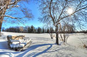 Фотография Парки Зима Скамья Снег Деревьев Природа