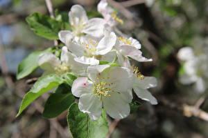Обои Весна Природа