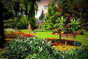 Картинки Канада Сады Бархатцы Торонто Газон Дерево Скамья Кустов Edwards Gardens Природа