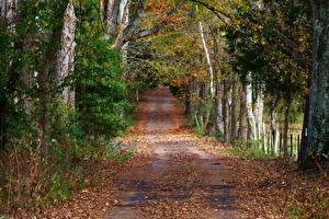 Фотографии Леса Дороги Осень Листья Природа