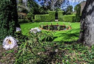 Обои США Сады Фонтаны Пионы Калифорнии Газон Кусты Filoli Gardens Природа