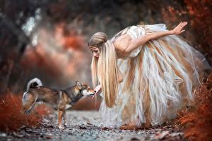 Обои Собаки Платья Encounter with the wood fairy, Shiba Inu животное Девушки
