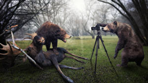 Фотографии Бурые Медведи Лоси Фотокамера Фотограф John Wilhelm, Just two trophy hunters Юмор