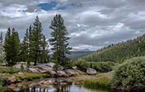 Фотографии Америка Парк Леса Камни Йосемити Ели Ручей Природа