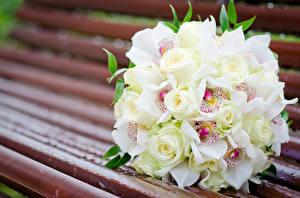 Фото Букеты Орхидеи Розы Скамейка цветок
