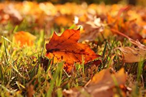 Картинка Осенние Трава Листья Природа