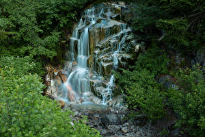 Картинки США Парки Водопады Леса Маунт-Рейнир парк