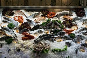 Обои Морепродукты Рыба Раки Лед