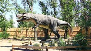 Фото Древние животные Динозавры Тираннозавр рекс Волгоград Животные