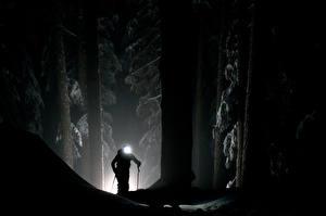 Обои Леса Лыжный спорт Ночью Силуэт