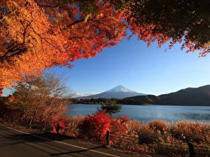 Обои Пейзаж Осень Гора Озеро Кустов Ветки Природа