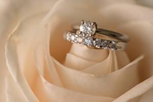 Фото Крупным планом Украшения Розы Бриллиант Ювелирное кольцо Свадьбе Цветы
