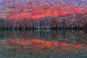 Обои Лес Озеро Осень Природа
