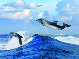 Фотография Волны Небо Дельфины Два Животные