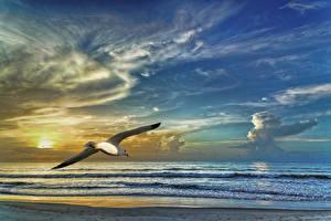 Фотографии Чайки Море Птицы Небо Облака Природа Животные