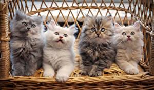 Фото Коты Котят Скамья Взгляд Животные