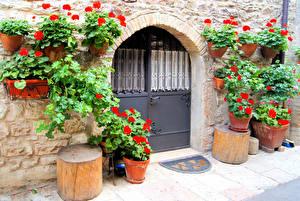 Фотографии Здания Бегония Двери Города Цветы