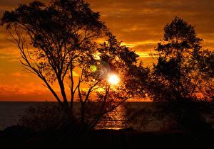Картинки Море Рассветы и закаты Деревья Силуэт Солнце Природа