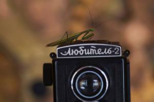 Картинки Богомол Насекомые Винтаж Крупным планом Фотокамера Любитель 2 Животные