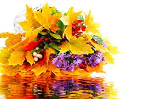 Обои Букеты Осень Ягоды Листья Белый фон Природа