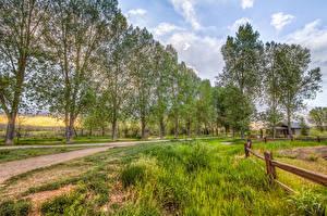 Картинка Лето Дороги Дерева Трава Природа