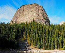Обои Канада Парк Горы Банф Ели Природа