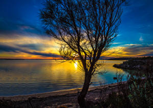 Обои Пейзаж Австралия Берег Рассветы и закаты Деревья Port Lincoln Природа